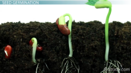What is Seed Germination? - Definition, Process, Steps & Factors