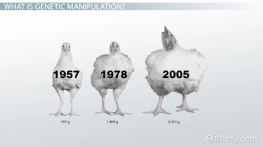 Genetic Manipulation: Definition, Pros & Cons