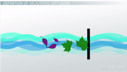 Facilitated Diffusion: Definition, Process & Examples