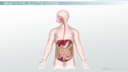 Complete vs. Incomplete Digestive Systems
