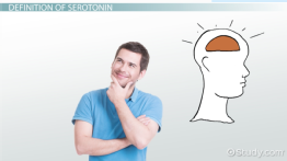 What is Serotonin? - Definition & Function
