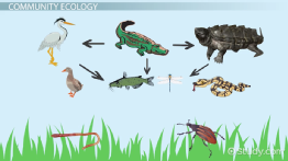 What Is Ecology? - Definition & Explanation