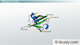 Post translational Modifications of Proteins