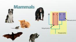 Evolutionary Relationships: Definition & Diagram