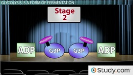 Bacterial Fermentation Process & Products