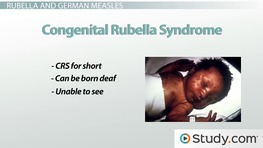 Rubella and German Measles: Diseases of the Togaviridae Virus Family