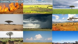 The Grassland Food Web: Temperate, African & Tropical