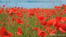 What Are Perennial Plants? - Examples & Types