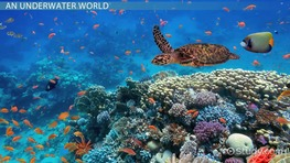 The Food Web & Ecosystem of Coral Reefs