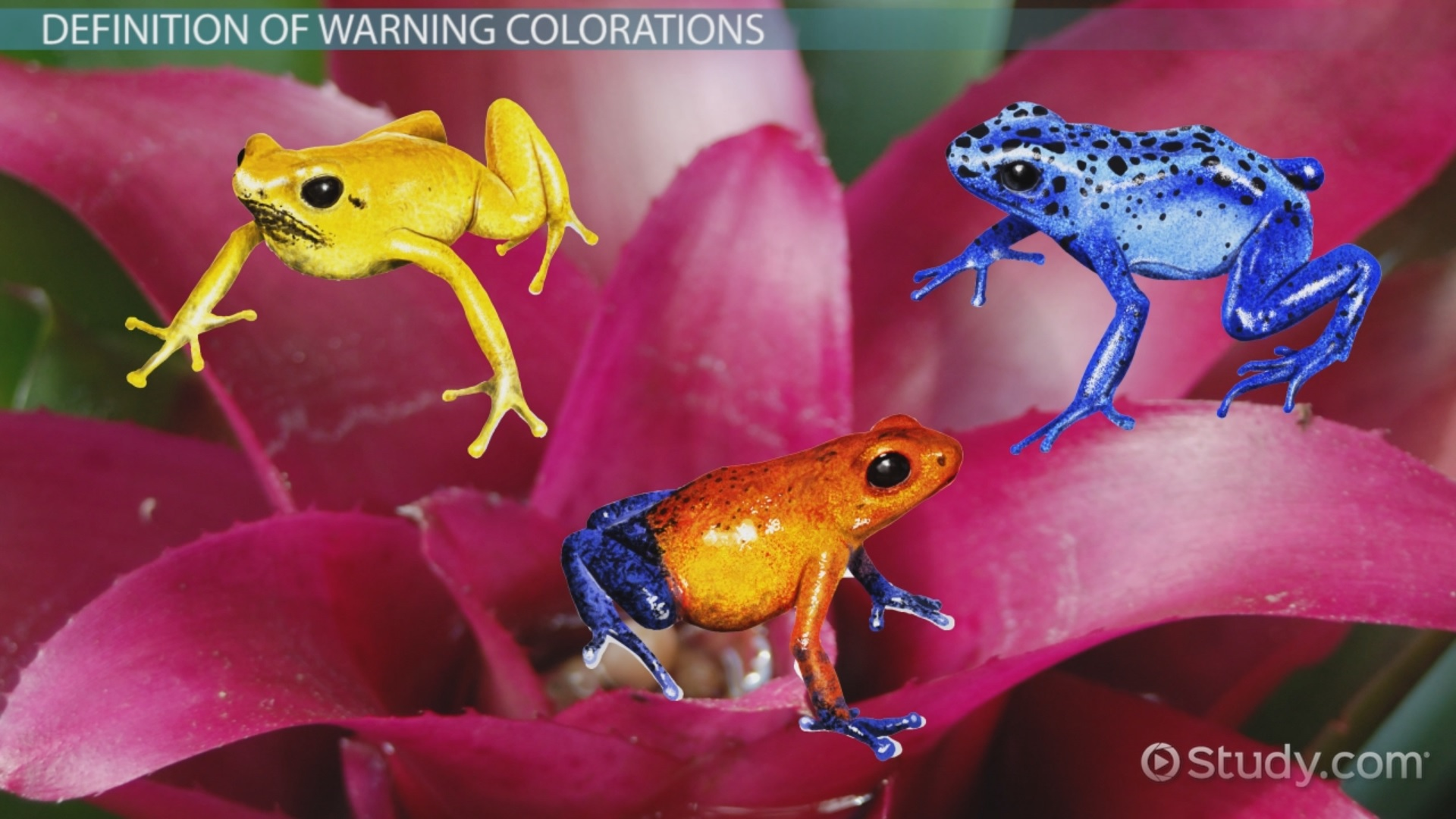 Warning Coloration in Animals: Examples, Overview - Video & Lesson ...