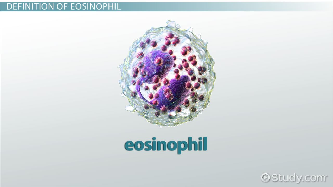what are eosinophils  - definition  u0026 function