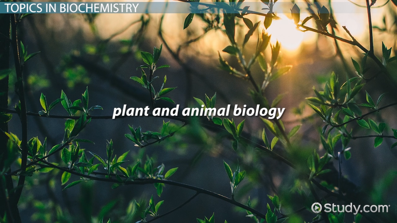 what is biochemistry? - definition, history & topics - video, Human Body