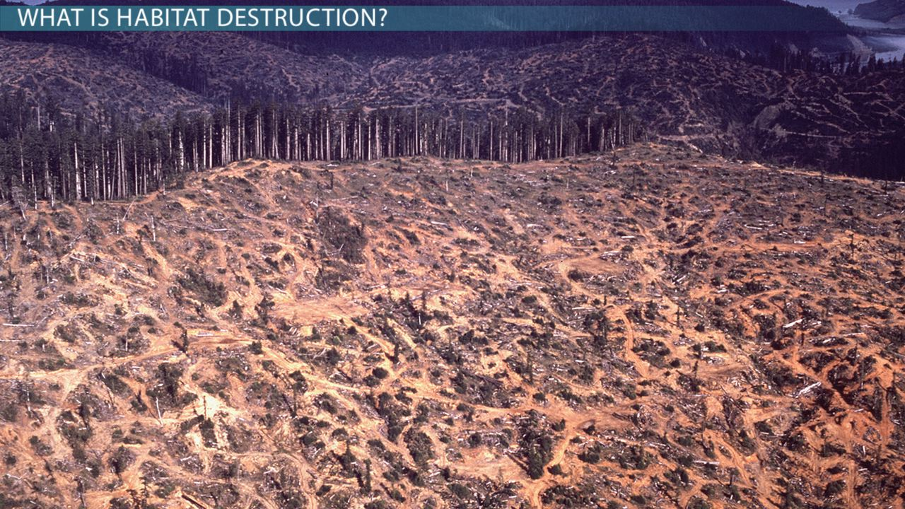 What is habitat destruction effects definition causes video lesson transcript for Construction habitat