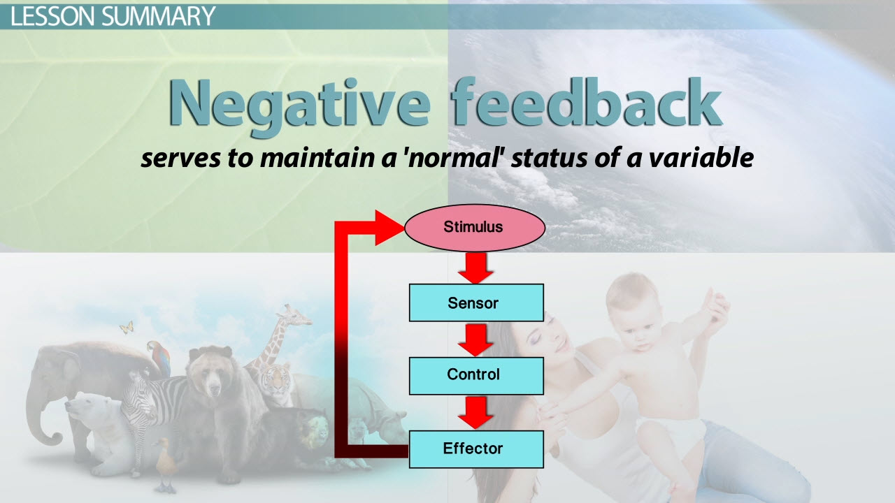 What Is Negative Feedback In Biology Definition Examples