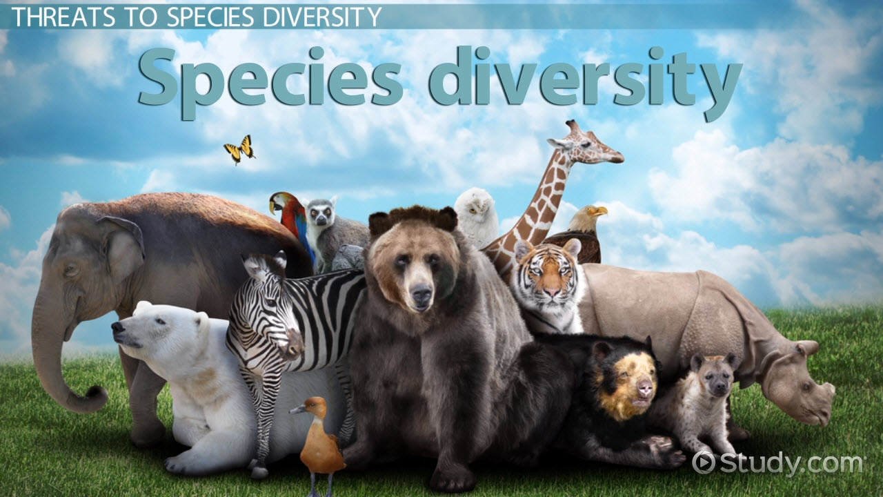What is Species Diversity? - Definition, Importance & Examples - Video ...