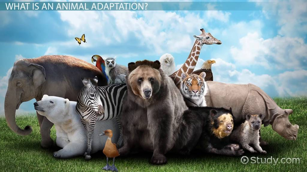 Animal Adaptations Lesson For Kids Video Lesson Transcript