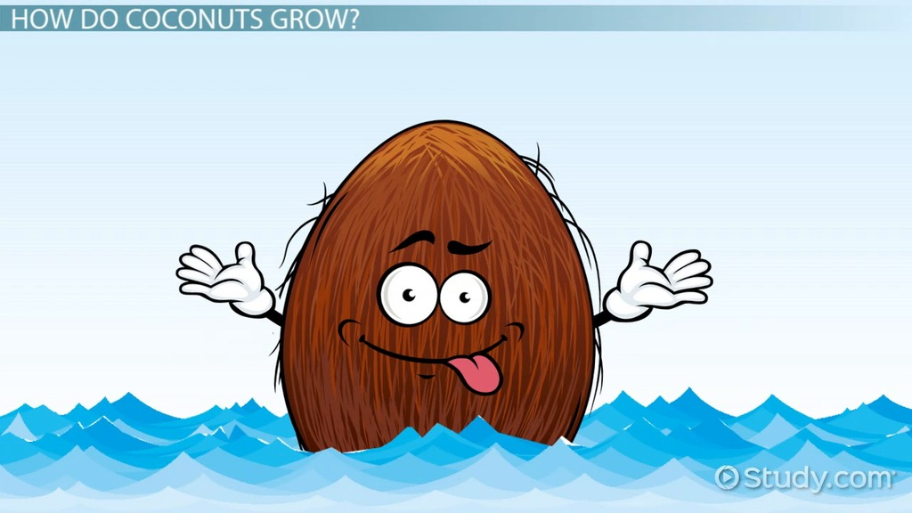 coconut tree lesson for kids facts uses video lesson  coconut tree lesson for kids facts uses video lesson transcript com